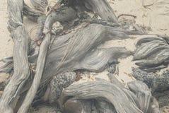 大树的根在海滩的 免版税库存照片
