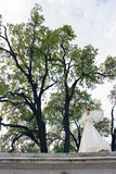 大树背景的新娘  库存图片
