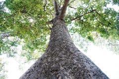 大树蚂蚁注视看法 库存图片