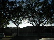 大树6 库存照片