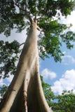 大树 库存照片
