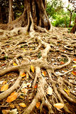 大根结构树 库存图片