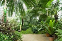 大棕榈温室 免版税库存照片