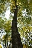 大棕色树干和老树新的绿色叶子  库存照片