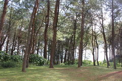 大森林 库存照片