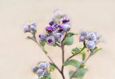 大植物名,四季不断的草本植物特写镜头 图库摄影