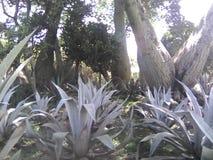 大植物群 免版税库存图片