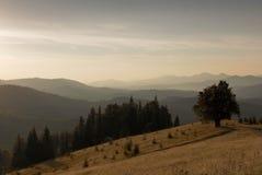 大横向山山 在远足的道路附近的偏僻的树 免版税库存照片
