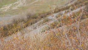 大横向山山 通过在山的路 汽车沿在山的路驾驶 路蛇纹石 股票视频