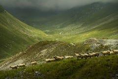 大横向山山 高处路在喀尔巴汗 免版税库存图片