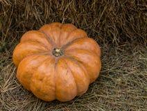 大橙色秋天的南瓜成熟有肋骨标志在秸杆背景的 库存图片
