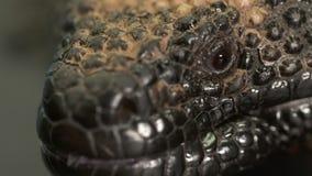大毒蜥怪物的左眼睛 股票视频