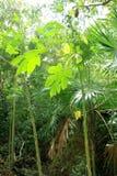 大气背景绿色密林雨林 免版税库存图片