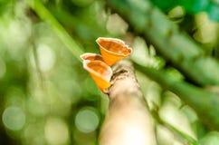 大汉山国家公园真菌 库存图片