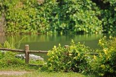 大池塘岩石结构树 图库摄影