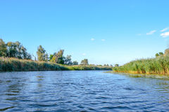大河岸植被的风景图象 图库摄影