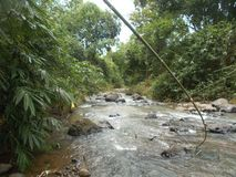 大河洪水和竹森林,印度尼西亚 库存图片