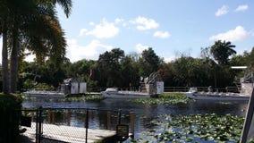 大沼泽地国家公园,迈阿密 佛罗里达 库存照片