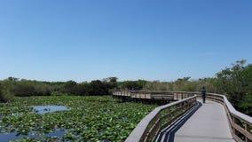 大沼泽地国家公园 库存图片