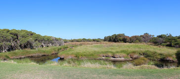 大沼泽Bunbury西部澳大利亚全景  库存照片