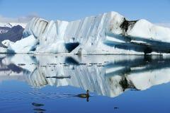 大浅兰的冰山在 Jökulsarlon冰川盐水湖的光芒四射的阳光下,反射在水中,游泳在前面的鸭子 图库摄影