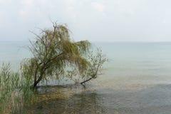 大浪淹没的树 免版税库存图片