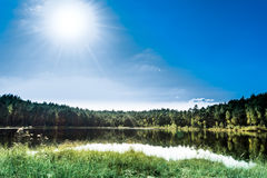 大海在有杉树的一个森林湖 库存照片