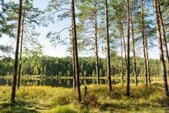大海在有杉树的一个森林湖 免版税库存照片