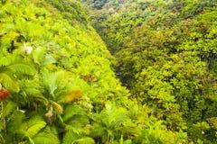 大海岛夏威夷一点河在密林 库存照片