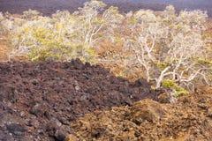 大海岛夏威夷kilawea国家公园 图库摄影