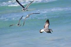 大海鸟信天翁坐与牺牲者的水在它的额嘴 免版税库存照片