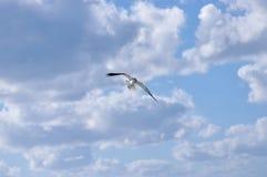 大海鸟信天翁飞行在海 图库摄影