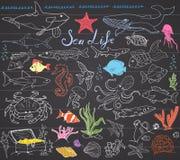 大海洋生活动物手拉的剪影集合 鱼乱画、鲨鱼、章鱼、海星和螃蟹、鲸鱼和海龟,海象和 免版税库存图片