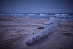 大湖海滩在冬天 免版税库存图片