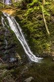 大瀑布在喀尔巴阡山脉的森林里 免版税库存照片