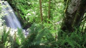 大瀑布在降低水池的森林滴下的水中 影视素材