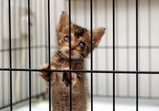 大瀑布小猫抢救 库存图片
