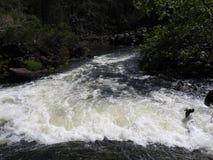 大瀑布峡谷第一个水池,朗塞斯顿,塔斯马尼亚岛 免版税图库摄影
