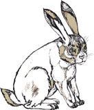 大灰色兔子 免版税库存图片