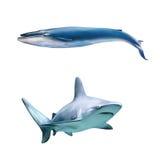 大灰色礁石鲨鱼和蓝色wale 图库摄影
