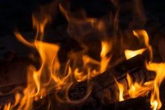 大灼烧的篝火 免版税图库摄影