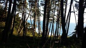 大炮海滩通过树 免版税图库摄影
