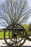 大炮结构树 库存照片