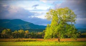 大烟山国家公园风景风景 免版税库存图片