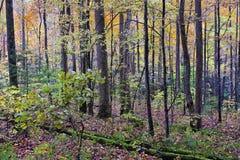 大烟山在秋天 免版税库存照片