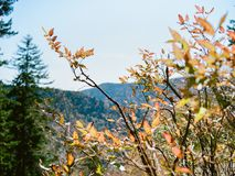 大烟山风景在秋天 库存照片