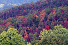 大烟雾弥漫的山脉国家公园 免版税库存图片