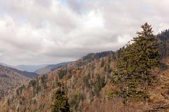 大烟雾弥漫的山脉树 免版税图库摄影