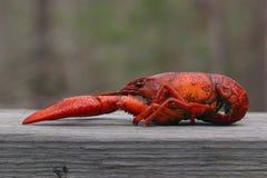 大煮沸的小龙虾 免版税库存照片