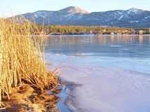 大熊有冰和雪的湖海岸线 库存照片